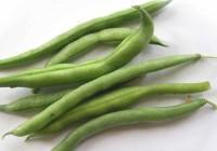Fagiolini: tutte le varietà del fagiolo Phaseolus vulgaris