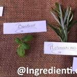 Erbe aromatiche: dall' alloro allo zafferano